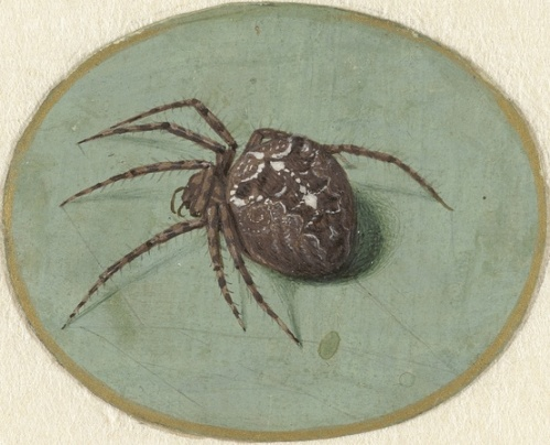 Jan Augustin van der Goes, Spider, 1690