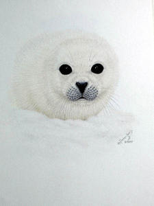 the porter family_ baby seal in snow