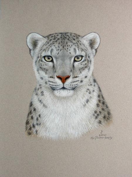the porter family_ snowleopard