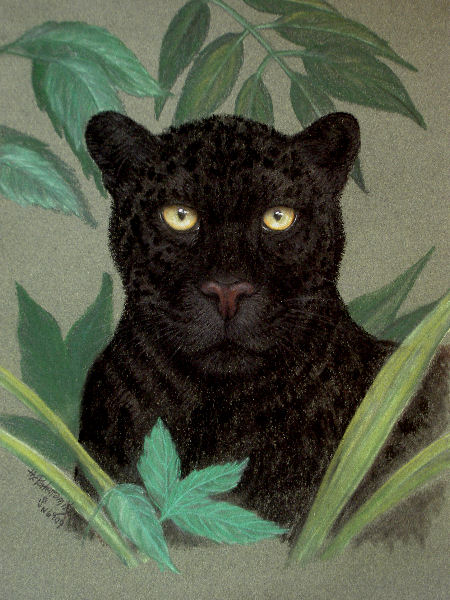 The Porter Family_black leopard