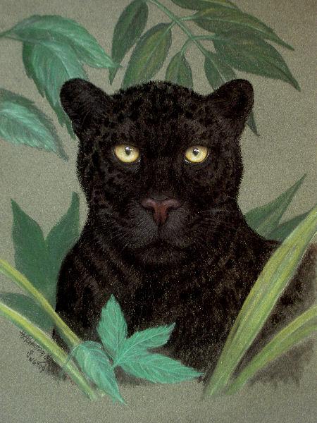 The Porter Family_black leopard